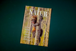 Finlands Natur is a quarterly magazine publishedby the NGO Natur & Miljö. It's a blend of nature reportage and sustainable living interviews, redesigned to reflect this and appeal to an urban audience in spring 2018.
